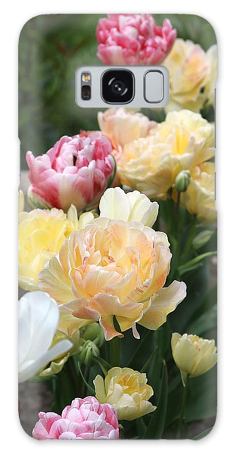 Parrot Tulips Galaxy S8 Case featuring the photograph Parrot Tulips by Kevin F Cook