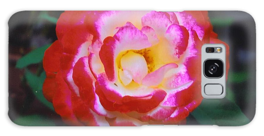 Home Grown Galaxy S8 Case featuring the photograph Rose by Robert Floyd