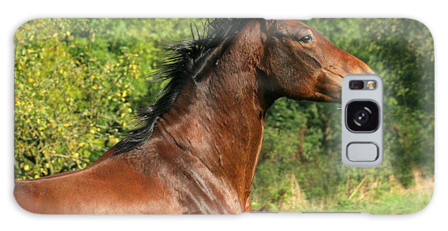 Horse Galaxy S8 Case featuring the photograph The Bay Horse by Angel Ciesniarska