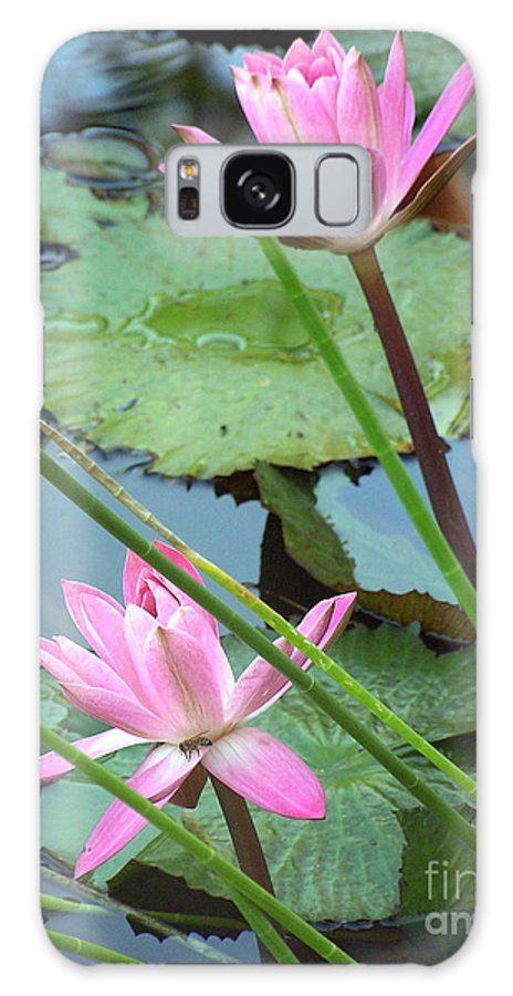 Waterlily Galaxy S8 Case featuring the photograph Pink Water Lily Pond by Irina Davis