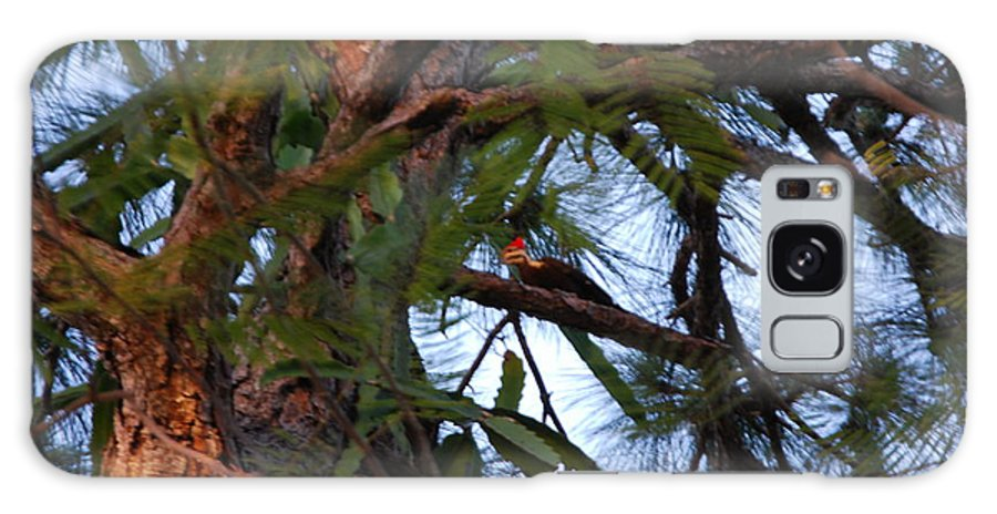 Rare Woodpecker Visits My House Every Couple Of Months In Search Of Bugs In My Trees. Galaxy S8 Case featuring the photograph Pileated Woodpecker by Robert Floyd