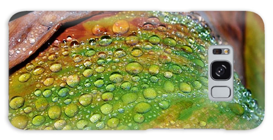 Macro; Raindrops; Wet; Warm; Water; Orange; Red; Stripes; Flower; Garden; Summer; Plant; Green; Lily; Background; Decorative Galaxy S8 Case featuring the photograph Raindrops On Lily Leaf by Werner Lehmann