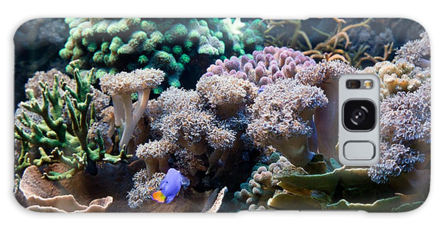 Fish Galaxy S8 Case featuring the photograph Underwater Life by Michal Bednarek