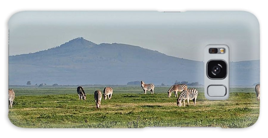 Close Up; Zebras; Rain; Morning; Sunshine; Animal; Black; White; Stripes; Field; Meadow; Green; Grass; South Africa; Swartland; Background; Galaxy S8 Case featuring the photograph Zebras by Werner Lehmann