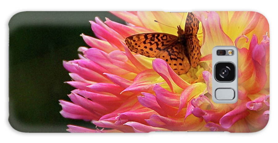 Spangled Butterfly In A Dahlia Flower Galaxy S8 Case featuring the photograph A Blazing Harmony by Byron Varvarigos