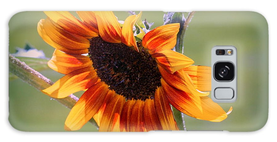 Sunflower Galaxy S8 Case featuring the photograph A Bow To Mother Nature by Rosanne Jordan