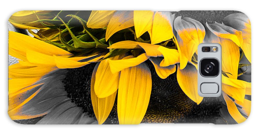 Sunflower Galaxy S8 Case featuring the photograph A Different Kind Of Sunflower by Rene Triay Photography