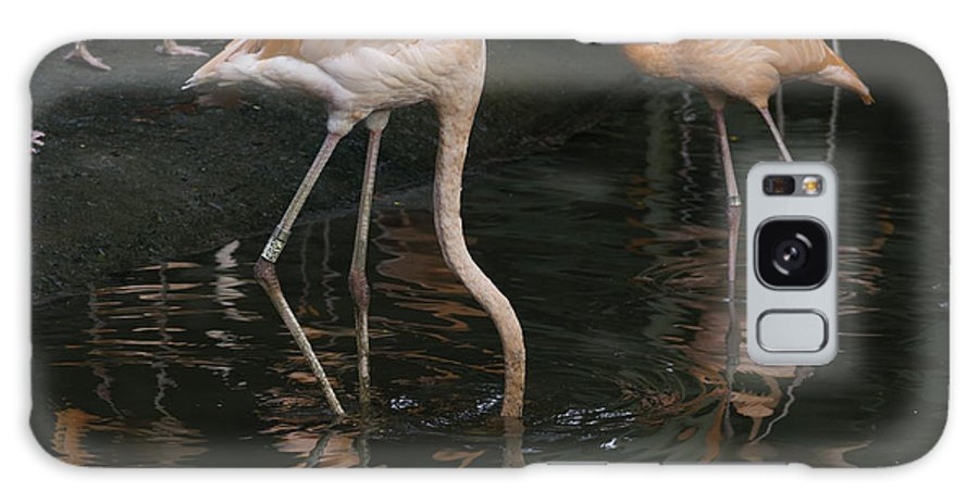 Asia Galaxy S8 Case featuring the photograph A Flamingo With Its Head Under Water In The Jurong Bird Park by Ashish Agarwal