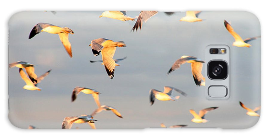 Seagulls Galaxy S8 Case featuring the photograph A Flock Of Seagulls by Michael Allen