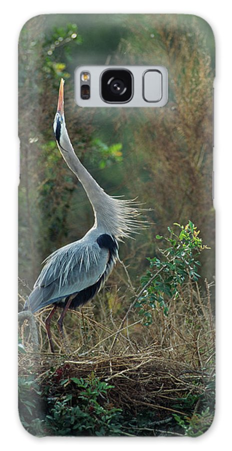 Ardea Herodias Galaxy S8 Case featuring the photograph A Great Blue Heron Exhibits Greeting by Klaus Nigge