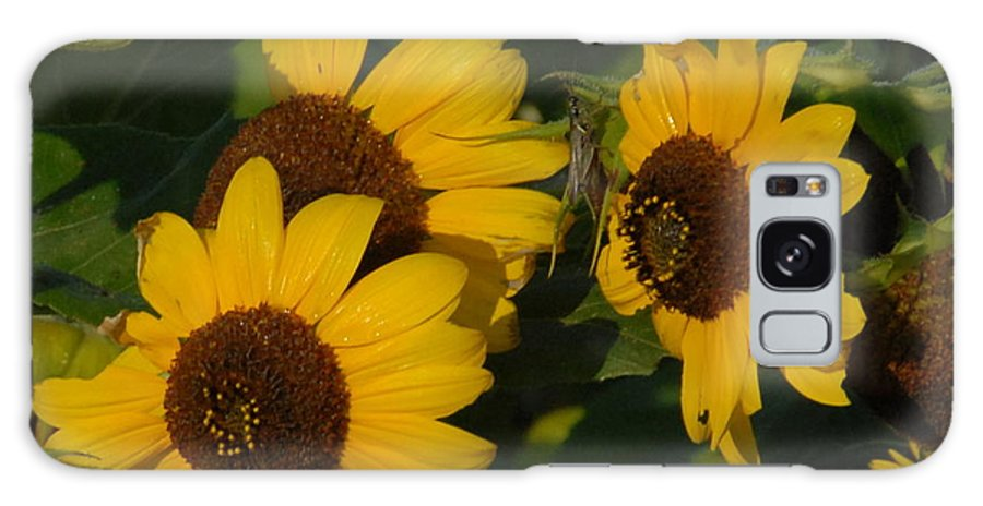 Sun Galaxy S8 Case featuring the photograph A Group Of Sunflowers by Deborah Coe