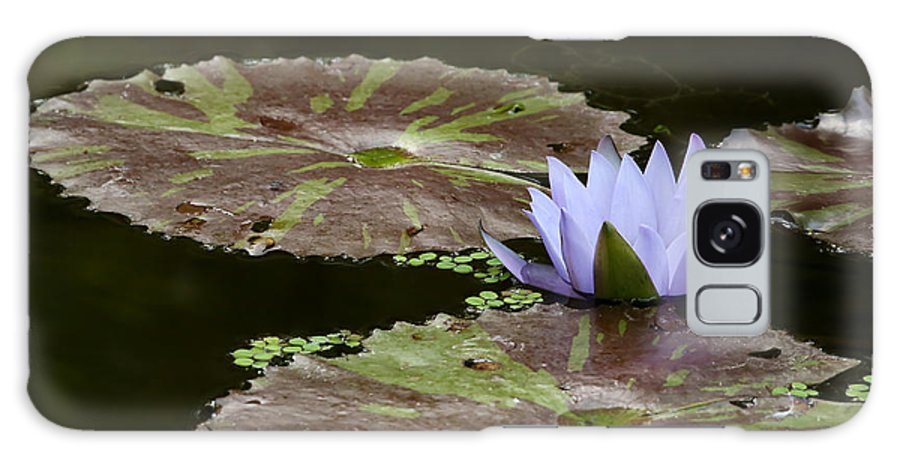Art Galaxy S8 Case featuring the photograph A Little Lavendar Water Lily by Sabrina L Ryan