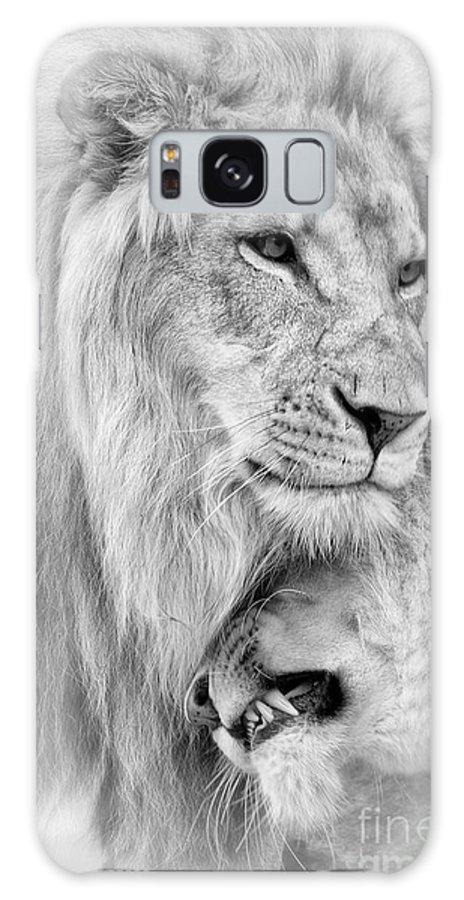 Lions Galaxy S8 Case featuring the photograph A Little Loving by Linda D Lester
