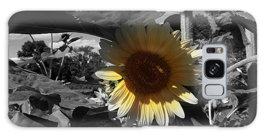 Sunflowers Galaxy S8 Case featuring the photograph A Lone Sunflower In The Shade by Deborah Fay