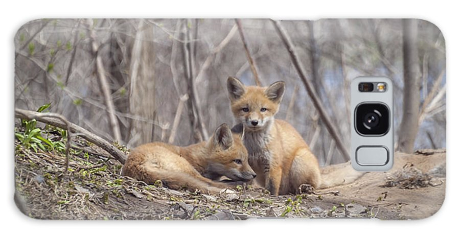 Red Foxs Galaxy S8 Case featuring the photograph A Pair Of Cute Kit Foxes 2 by Thomas Young