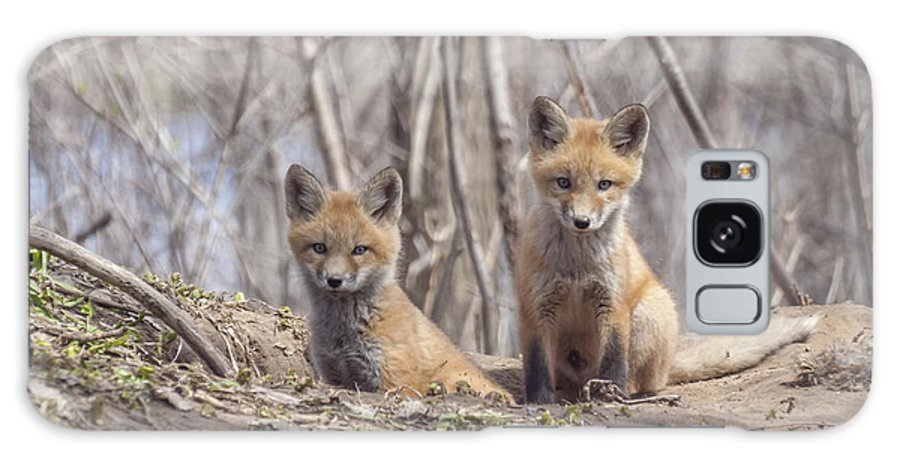 Kit Red Foxes Galaxy S8 Case featuring the photograph A Pair Of Cute Kit Foxes 3 by Thomas Young