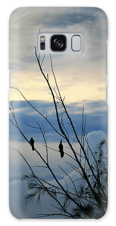 Belize Galaxy S8 Case featuring the photograph A Pair Of Melodious Blackbirds by Nick Busselman
