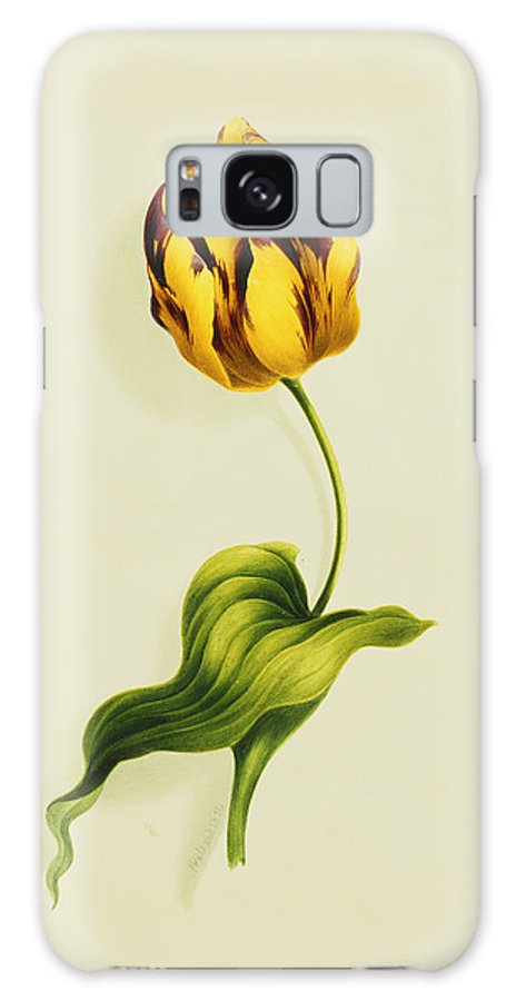 Biology Galaxy S8 Case featuring the painting A Parrot Tulip by James Holland