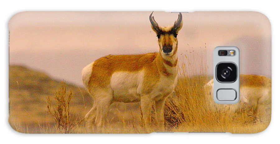 Wildlife Galaxy S8 Case featuring the photograph A Pronghorn Gazes by Jeff Swan