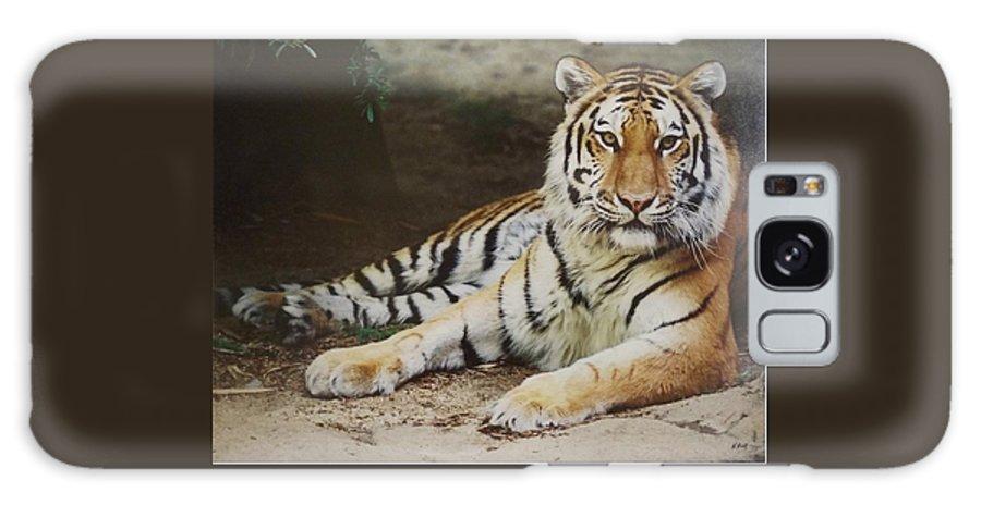 Tiger Galaxy S8 Case featuring the photograph A Real Kitty by Wanda Dansereau