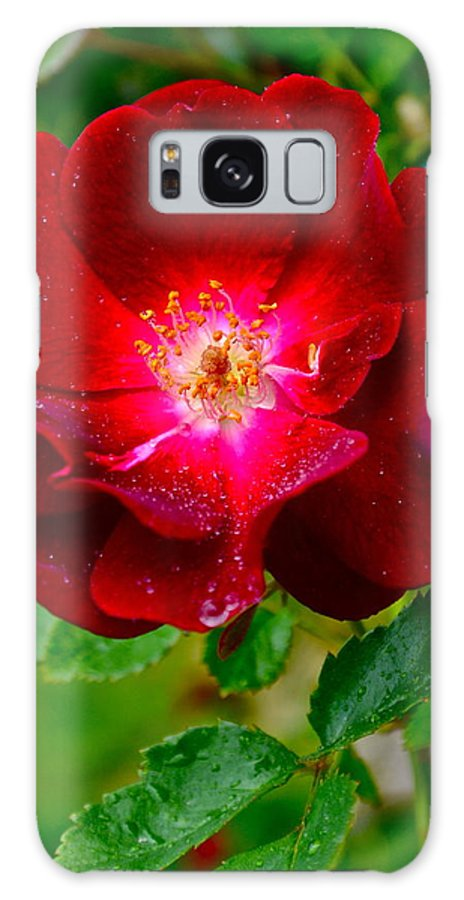 Rose Galaxy S8 Case featuring the photograph A Rose Is A Rose by Frozen in Time Fine Art Photography