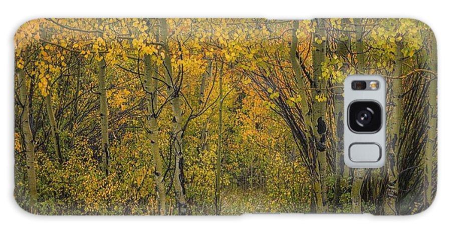Aspens Galaxy S8 Case featuring the photograph A Teton Autumn by Tom Fretz
