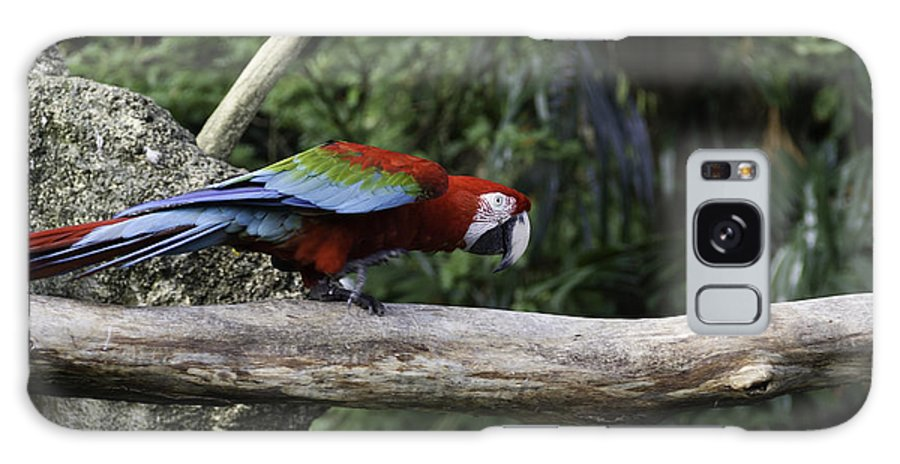 Asia Galaxy S8 Case featuring the photograph A Very Colorful And Bright Macaw Bird Perched On A Branch by Ashish Agarwal