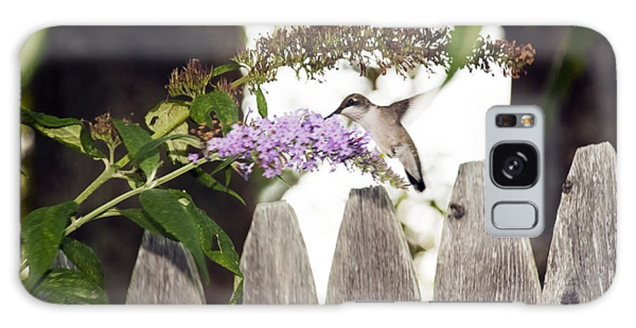 Hummingbird Galaxy S8 Case featuring the photograph A Visitor by Lynn Bouley