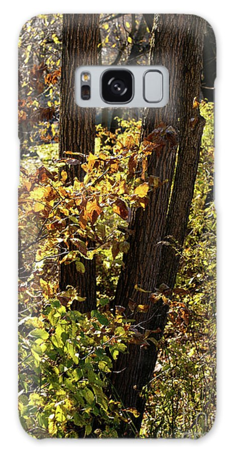 Woods Galaxy S8 Case featuring the photograph A Walk Through The Woods - 1 by Linda Shafer