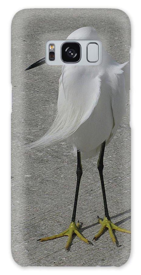 Bird Galaxy S8 Case featuring the photograph A Windy Day by Donna Brown