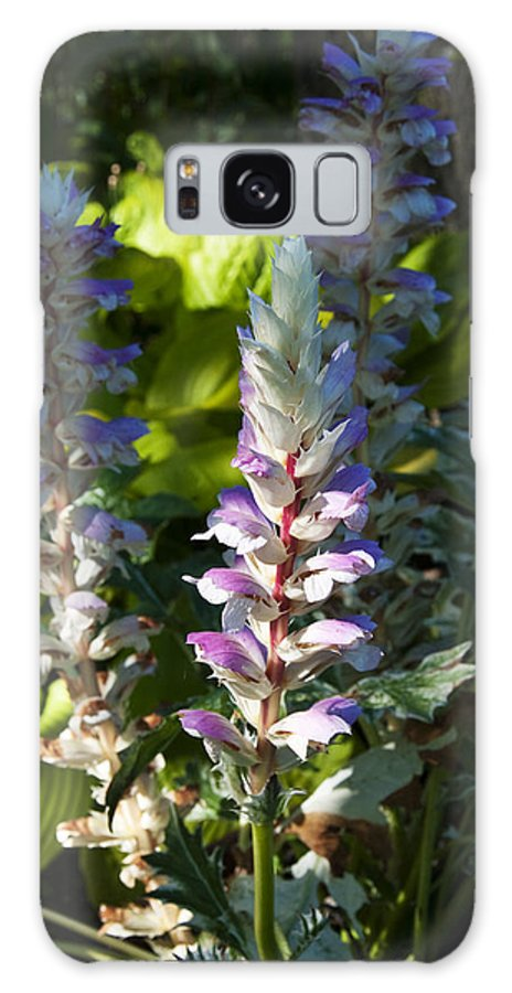 Bear's Breeches Galaxy S8 Case featuring the photograph Acanthus Flower by Paul Cannon