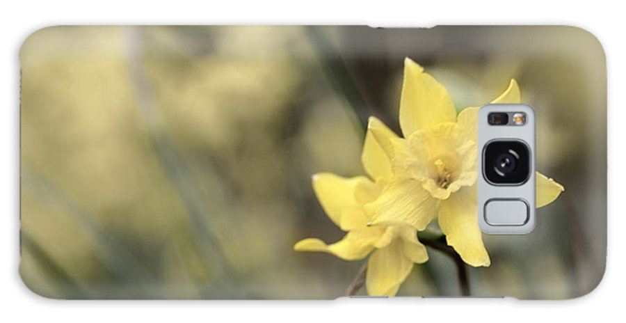 Daffodils Galaxy S8 Case featuring the photograph Acid Washed Daffodils by Robert Camp