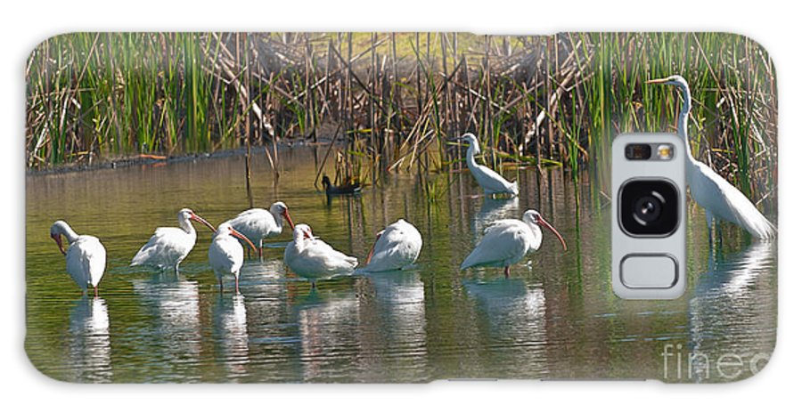 White Galaxy S8 Case featuring the photograph Adult White Ibis by Anne Kitzman