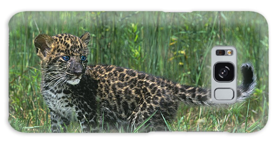 Africa Galaxy S8 Case featuring the photograph African Leopard Cub In Tall Grass Endangered Species by Dave Welling