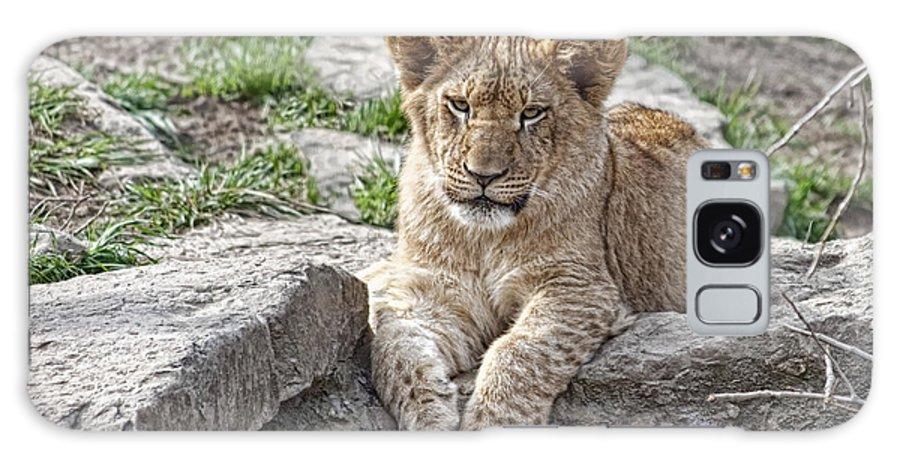 Lion Cub Galaxy S8 Case featuring the photograph African Lion Cub by Tom Mc Nemar