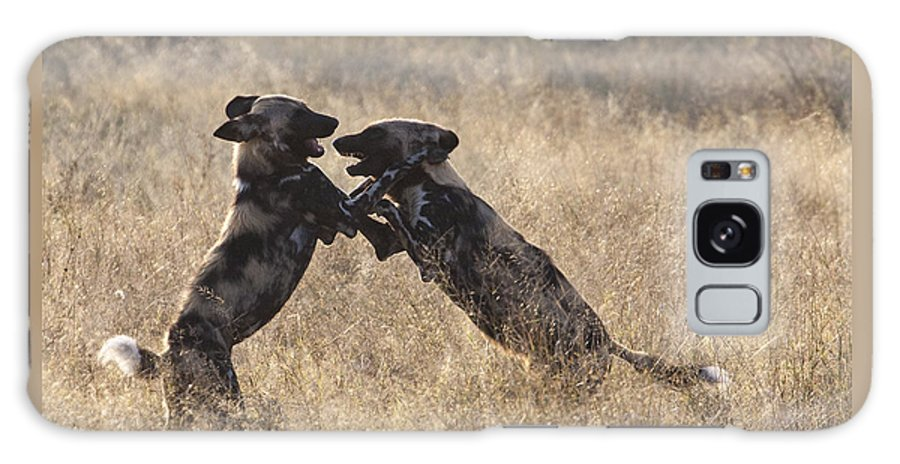African Wild Dog Galaxy S8 Case featuring the photograph African Wild Dogs Playing Lycaon Pictus by Liz Leyden