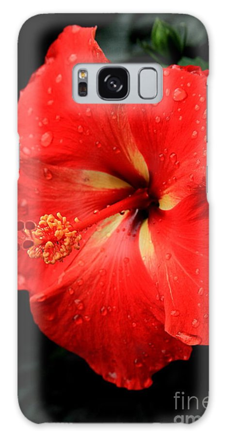 Reid Callaway Red Flowers Galaxy S8 Case featuring the photograph Georgia Red Hibiscus After A Rain Greensboro Georgia Art by Reid Callaway