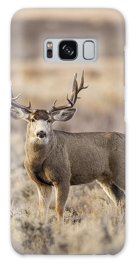 Mule Galaxy S8 Case featuring the photograph Afternoon Buck by D Robert Franz
