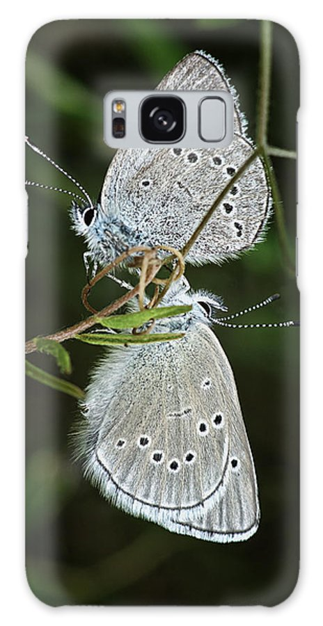 Butterfly Galaxy S8 Case featuring the photograph Afternoon Delight by Betty Depee