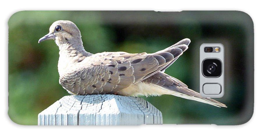 Dove Galaxy Case featuring the photograph Afternoon Visitor by Rennae Christman