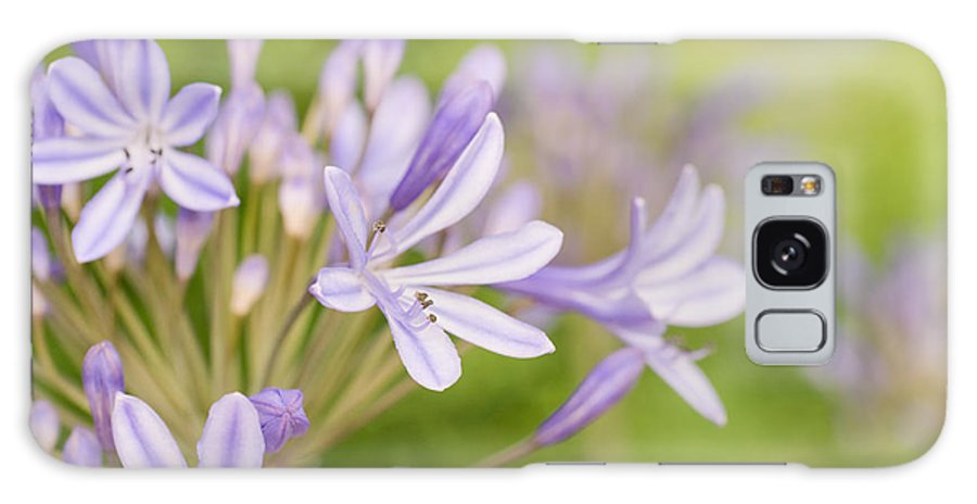 Agapanthus Galaxy S8 Case featuring the photograph Agapanthus by Delphimages Photo Creations