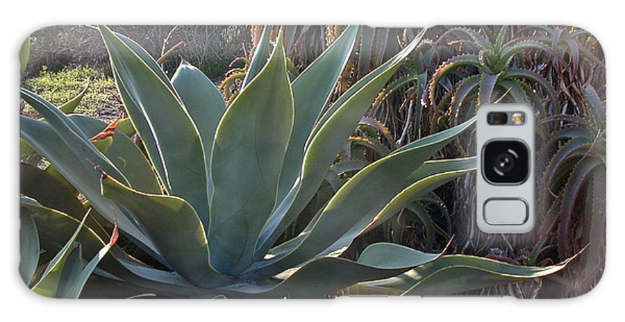 Agave Galaxy S8 Case featuring the photograph Agave by Douglas Barnett