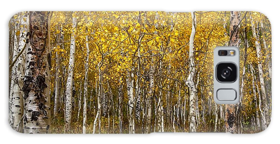Aspens Galaxy S8 Case featuring the photograph Age Pitted Aspens by Mitch Johanson