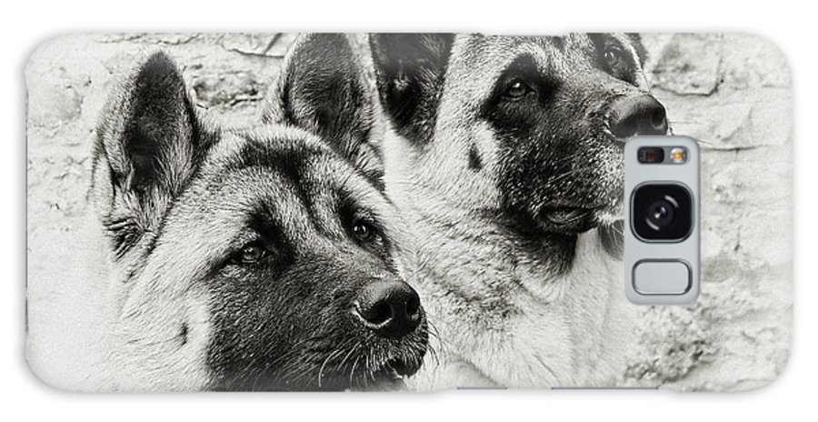 Dog Galaxy S8 Case featuring the photograph Akitas by Susie Peek