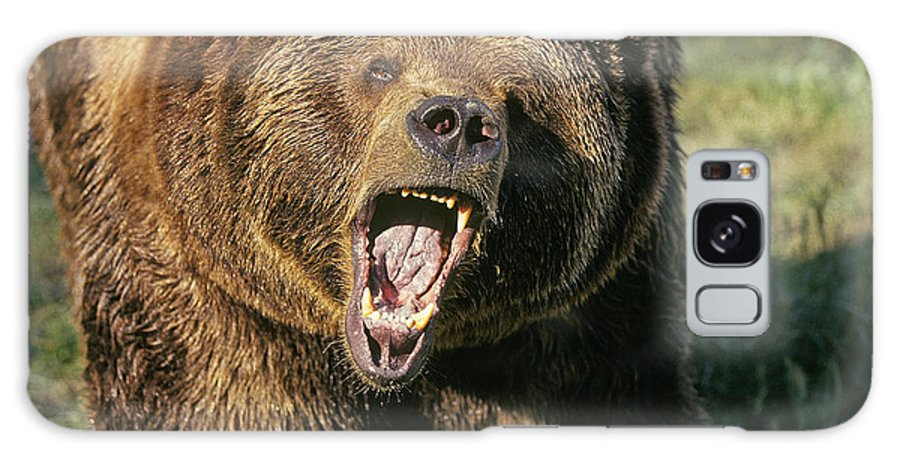 Bears Galaxy S8 Case featuring the photograph Alaskan Grizzly by Buddy Mays