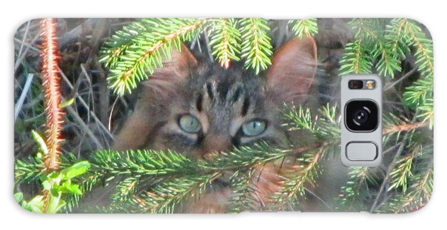 Alaska Galaxy S8 Case featuring the photograph Alaskan Wild Cat by Larry Marano