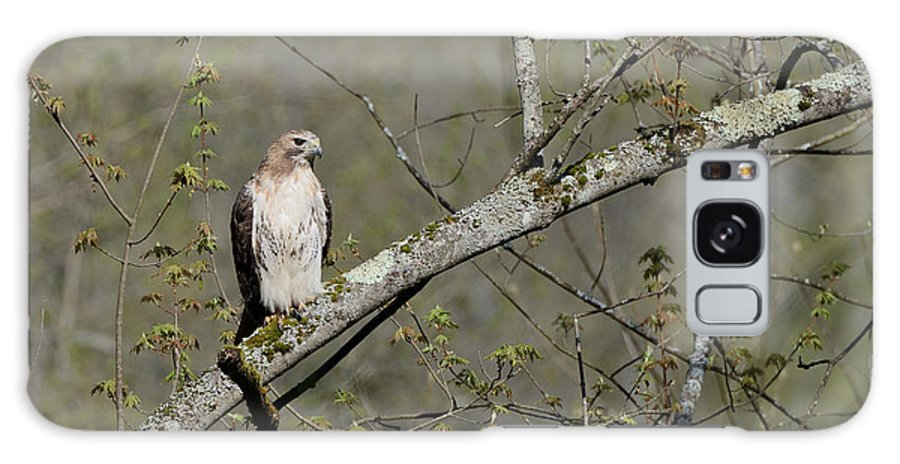 Red-tailed Hawk Galaxy S8 Case featuring the photograph Alert by Ian Ashbaugh