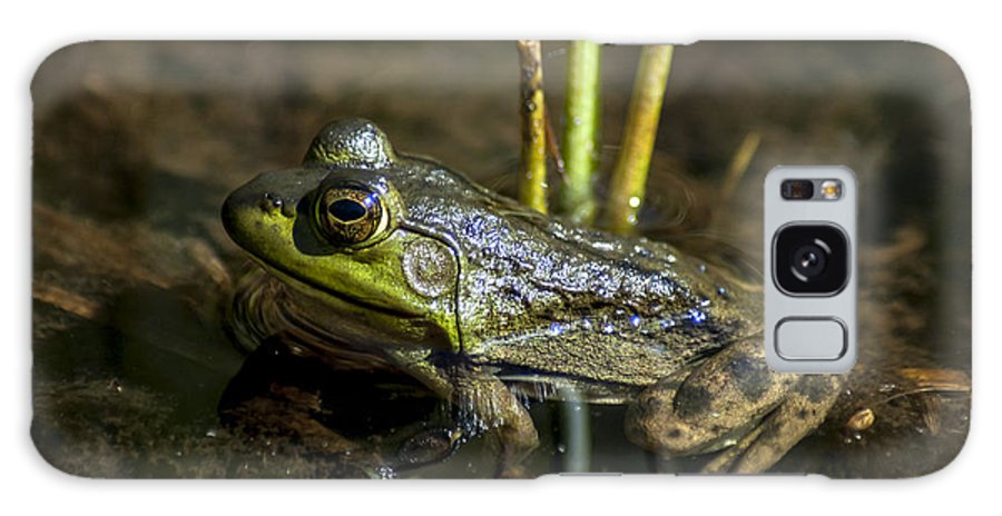 Frog Galaxy S8 Case featuring the photograph Algonquin Frog by Richard Kitchen