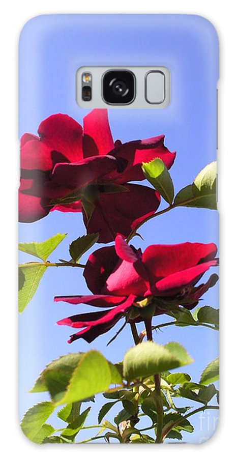 All About Roses And Blue Skies Iv Photograph Photography Galaxy S8 Case featuring the photograph All About Roses And Blue Skies Iv by Daniel Henning