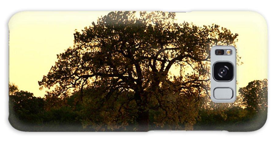 Tree Galaxy S8 Case featuring the photograph All Alone by Roseann Errigo